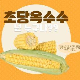 생으로 먹는 초당옥수수 달콤하고 아삭한 과일맛 옥수수~