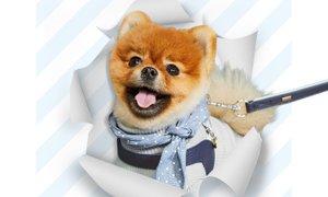 몽몽아 넌 헬로젤로 하네스 할때가 제일 예뻐! 반려동물 산책용품 전문브랜드 헬로젤로