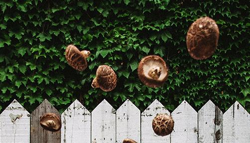 크루그와 버섯의 가을 나들이