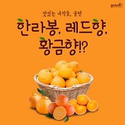 [인빌-월간1월호]맛있는녀석들, 귤편