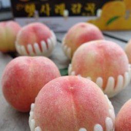 햇사레 복숭아 여름 대표 과일 새아침 수확~ 농가 배송~