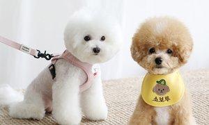 세상에 하나뿐인 강아지 스카프/하네스