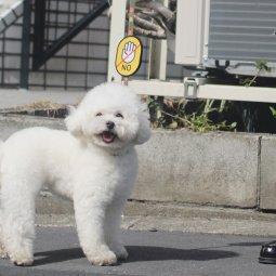 [멍랩] 옐로와펜 강아지인식표 산책용품 리드줄와펜