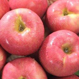 초신선 과일/야채 최고의 신선함을 홈쇼핑 판매상품 특가행사