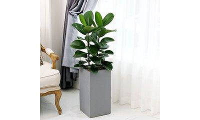 가을,겨울 미세먼지 잡는 우리집 공기정청 식물 엄선상품 특가 집들이선물 추천