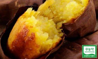 땅끝마을~ 해남 베니하루카 꿀 고구마 맛있구마~ 고구마야~