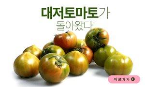 돌아온 대저토마토의 계절! 단짠단짠 토마토 맛보러 오세요