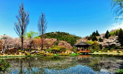 꽃놀이 갑시다♥ 국내 봄꽃여행 다양한 봄꽃축제 당일투어 특가