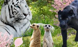 우리아이 좋아하는 동물원 일주일 한정특가 따뜻한 5, 6월엔 주말나들이♡
