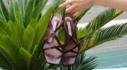 카렌화이트 Summer Shoes Collection