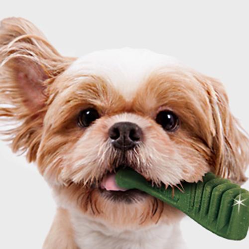 강아지 고양이 구강관리 상품 모음전