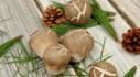 맛다름 추석명절 버섯선물세트 예약배송