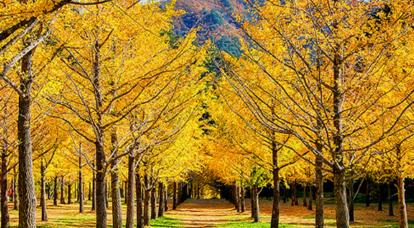 국내 가을축제 여행