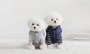 F/W 반려동물 패션위크 꼬까옷 입고 산책가자 패션브랜드전