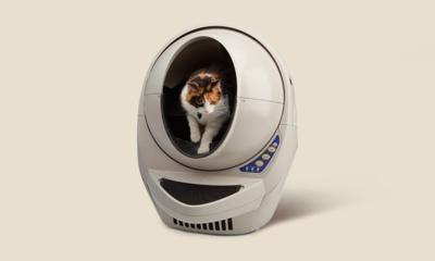 집사들 주목! 항상 필요한 고양이 모래&화장실 특가전