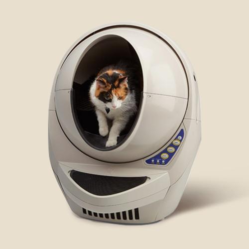 고양이 모래/화장실 특가