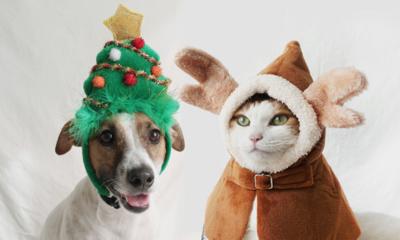 댕냥이의 크리스마스 Christmas with Pet 산타옷부터 방한용품까지