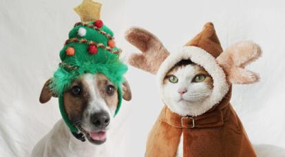 반려동물 크리스마스 용품 모음전