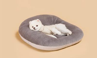 강아지&고양이 필수템 모음! 사료/패드/모래 外