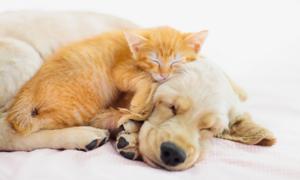 강아지 고양이 용품 기획전 최대 50% 할인