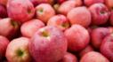 사과는 맛있어! 맛있는애플팩토리 맛있는애플팩토리 사과공장