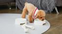 강아지고양이 실내용품 매트/방석/실내복外 브랜드별 특가 ~45%
