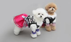 [이츠독] 추석 강아지 한복 한가위를 맞은 애견한복 특가전!