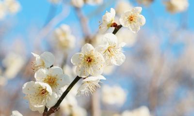 봄의 시작을 알리는 제주♥ 여기서 한번에 해결! 숙박/입장권 /렌트카 특가