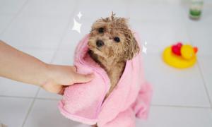 강아지 위생/미용/목욕용품전, 배변패드/이발기/샴푸/클리너外