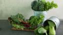 강원도에서 자란 신선한 채소 집 앞까지 신선하게 쓱- 일 년에 단 한 번 강원도 물산전!