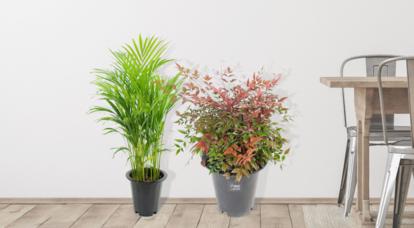 가을맞이 공기정화식물 할인전