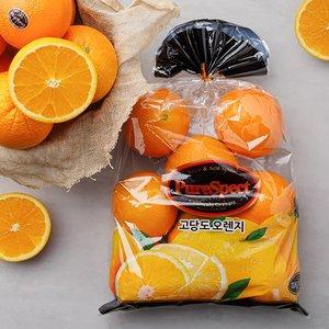 0121 비타민 가득 festa