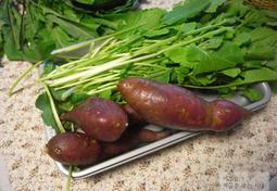 아삭아삭~ 환상적인 유채 물김치