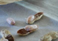 생땅콩삶기 : 햇땅콩 맛있게 삶아요~