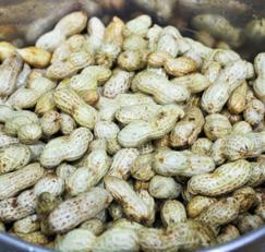 햇땅콩 맛있게 삶는법과 삶은땅콩 보관법