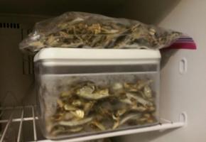 다시멸치 보관법 멸치를 냉동실에 보관합니다