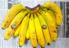 냉동없이 10일도 거뜬한 바나나 보관법