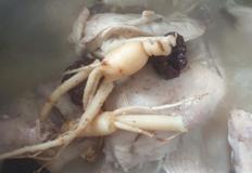 삼계탕/삼복(초.중.말복)더위/보양식