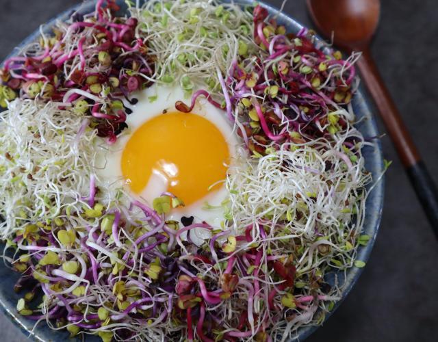 닭가슴살새싹비빔밥