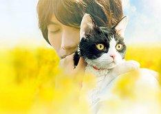 고양이 여행 리포트 영화시사회