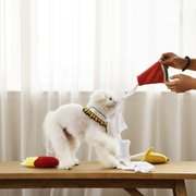 뽑아쓰는 노즈워크 강아지 장난감 티쓱
