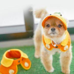 [돌로 LIFE] 너무나 귀여운 자외선 차단 강아지 썬캡 모자