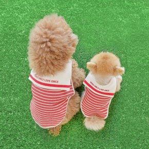 [돌로 LIFE] 커플룩으로 딱 좋은 강아지 스트라이프 티셔츠